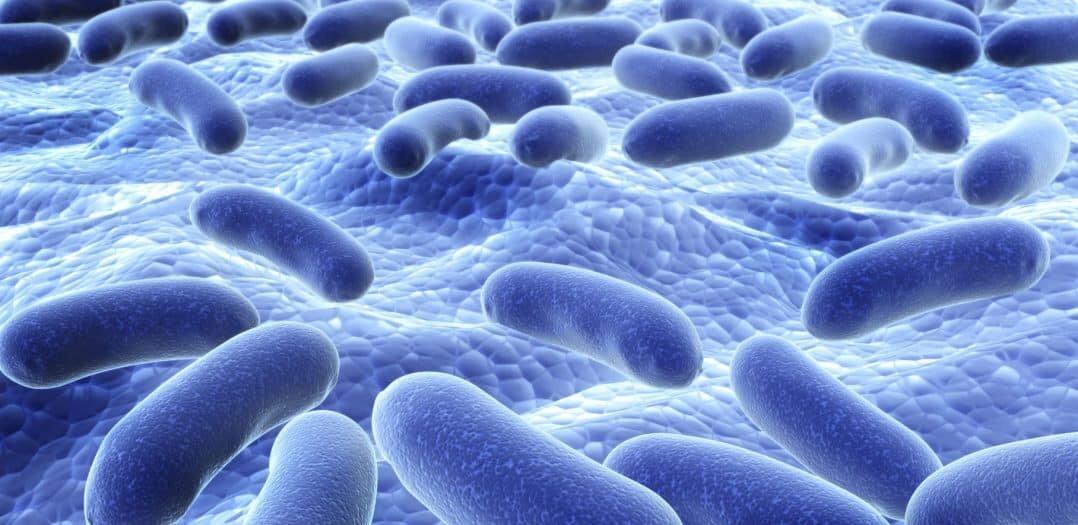 probiyotikler-kilo-vermenize-ve-karin-bolgesi-yag-yakimina-nasil-yardimci-olur