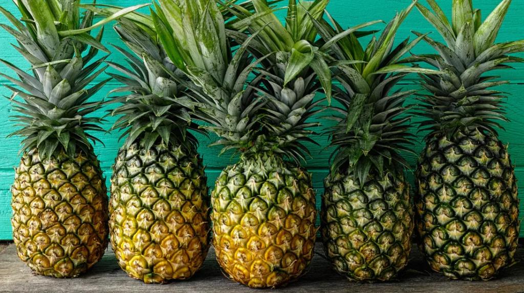 ananas-bagisiklik