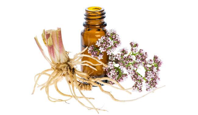 Anksiyeteye iyi gelen valerian root